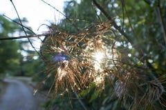 Solsken till och med trädvisare parkerar in arkivfoto