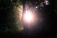 Solskenen till och med träden Royaltyfri Fotografi