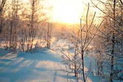solskenvinter Arkivbilder