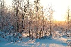 solskenvinter Royaltyfri Fotografi