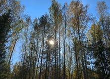 Solskinnen bak träden arkivfoto