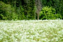 solståndbygdäng med blommor Royaltyfri Bild