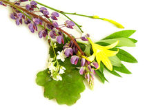 Solstice midsummer herbs flowers Royalty Free Stock Images