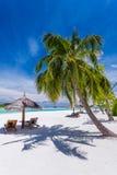 Solstolar och palmträd på en tropisk strand Royaltyfri Foto