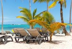 Solstolar på stranden bland palmträd royaltyfri fotografi
