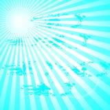 Solstrålar Arkivfoto