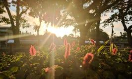 Solstrålar Fotografering för Bildbyråer