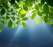 Solstrålar, blå himmel och gräsplansidor Vår och sommarnatur b arkivfoto
