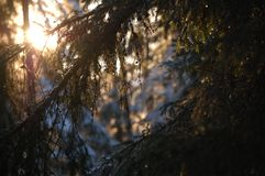 Solstrålar från skogen royaltyfria bilder