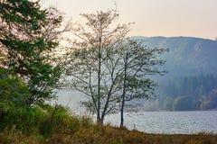 Solstrålar glöder till och med träd ner på en bergsjö arkivfoto