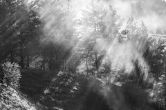 Solstrålar i de dimmiga skogstrålarna för morgon som bryter till och med dimman royaltyfria bilder