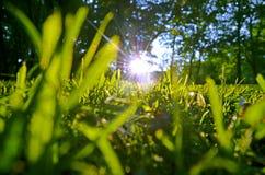 Solstrålar i det nya sommargräset Arkivfoto
