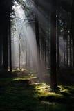 Solstrålar i en skog arkivfoto