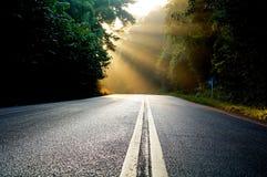 Solstrålar i färgrik höstskog Royaltyfri Foto