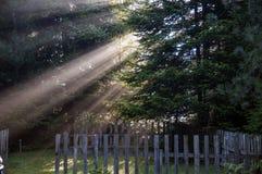 Solstrålar i morgonlynnet arkivfoto