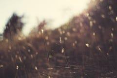 Solstrålar i nedgången på gräset fotografering för bildbyråer