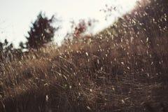Solstrålar i nedgången på gräset royaltyfri bild
