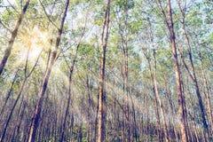 Solstrålar i skogen royaltyfri bild