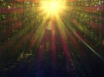 Solstrålar i skogen Arkivfoton