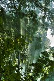 Solstrålar i skogen Royaltyfri Foto