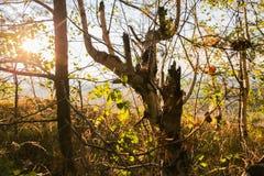 Solstrålar i skogvidder Royaltyfri Bild