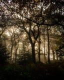 Solstrålar i träden Arkivbild