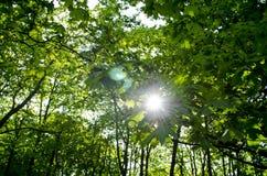 Solstrålar i trädsidorna Arkivbild