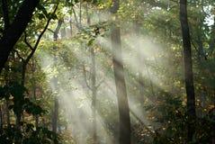 Solstrålar i trän Royaltyfri Bild