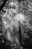 Solstrålar i trän Fotografering för Bildbyråer