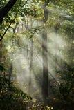 Solstrålar i trän Royaltyfri Foto