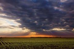 Solstrålar och moln ovanför cornfieldsna. Royaltyfri Foto