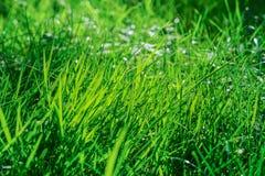 Solstrålar på den gröna gräsmattan fotografering för bildbyråer