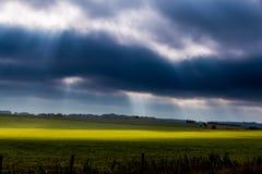 Solstrålar på fält Royaltyfri Fotografi