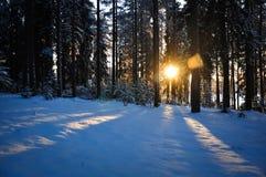 Solstrålar på snön Royaltyfria Foton