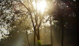 Solstrålar som filtrerar till och med träden Arkivbilder