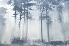 Solstrålar som kommer till och med skog med skuggade silhouetted träd arkivfoto