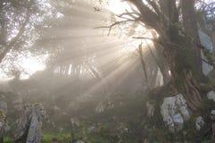Solstrålar som pasing till och med filialerna av ett träd arkivbilder