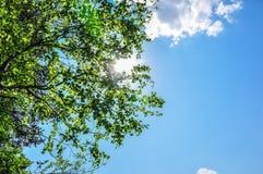 Solstrålar som skiner hogräsplansidor och filialer i blå himmel Arkivfoto