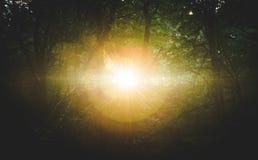 Solstrålar som spränger till och med en mörk skog Arkivfoto