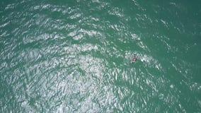 Solstrålar spelar på havvatten med surfarediagramet stock video