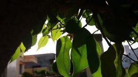 Solstrålar till och med bladet Arkivbild