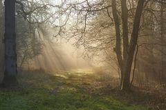 Solstrålar till och med den dimmiga morgonskogsmarkbanan på gryning royaltyfri fotografi
