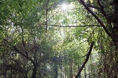 Solstrålar till och med grön trädbakgrund Arkivbilder