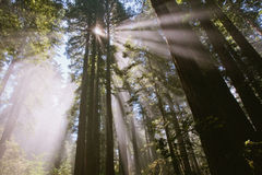 Solstrålar till och med skogen i den damfågelJohnson dungen Arkivfoton
