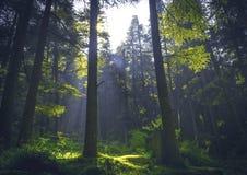 Solstrålar till och med träd royaltyfri fotografi