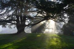 Solstrålar till och med träd arkivfoto