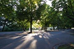 Solstrålar till och med träd Arkivbild