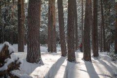 Solstrålar till och med träden i vinter arkivbilder