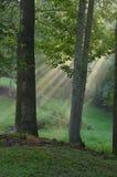 Solstrålar till och med tres Royaltyfri Bild