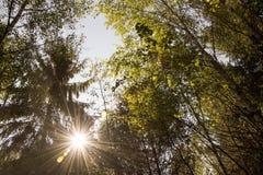 Solstrålarna skiner till och med träden i skogen arkivfoton